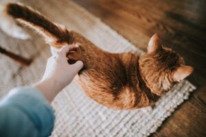 what does it mean when a cat wags its tail?