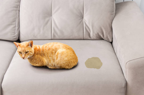 how to get cat pee out of couch