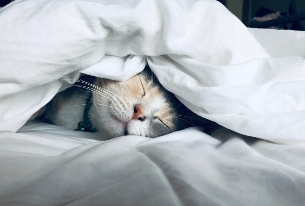 why does my cat suck on blankets