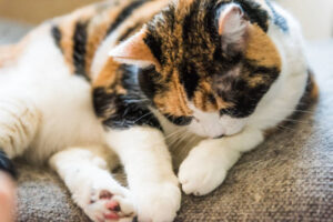 WHY DO CATS DROOL?