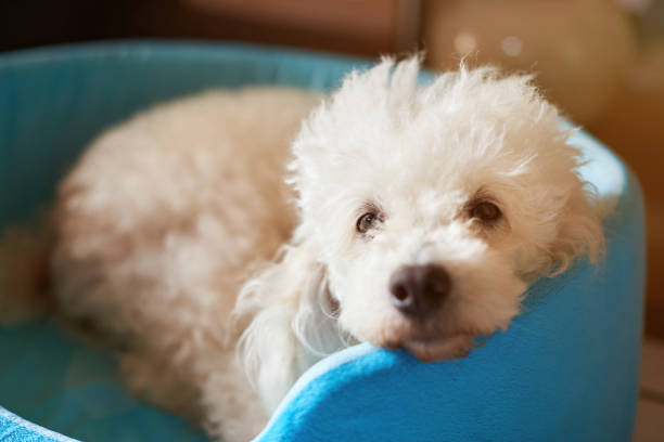 IS INCONTINENCE A REASON TO PUT A DOG DOWN?